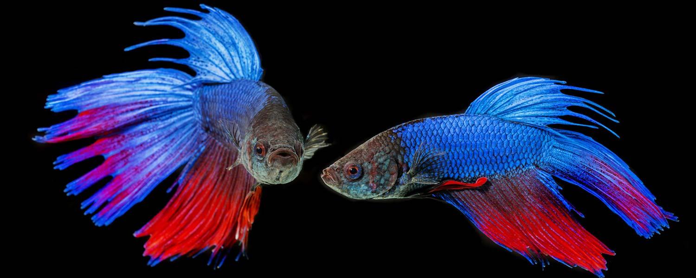 mondoacquatico-slide-pesci-acquario-03