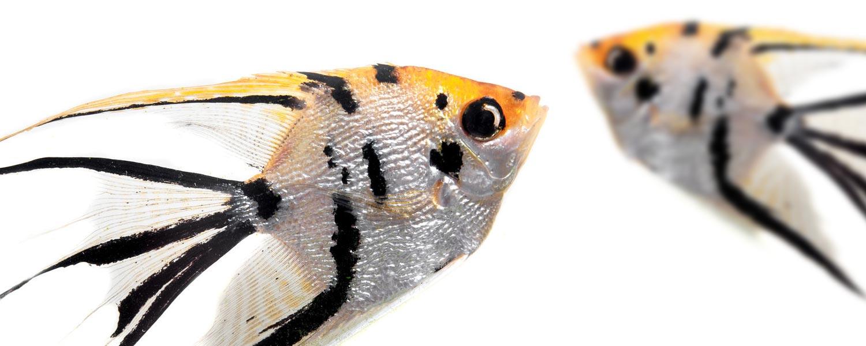 mondoacquatico-slide-pesci-acquario-04