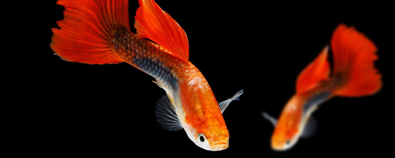 mondoacquatico-slide-pesci-acquario-05