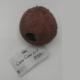 Cocos Cava 1-1 L